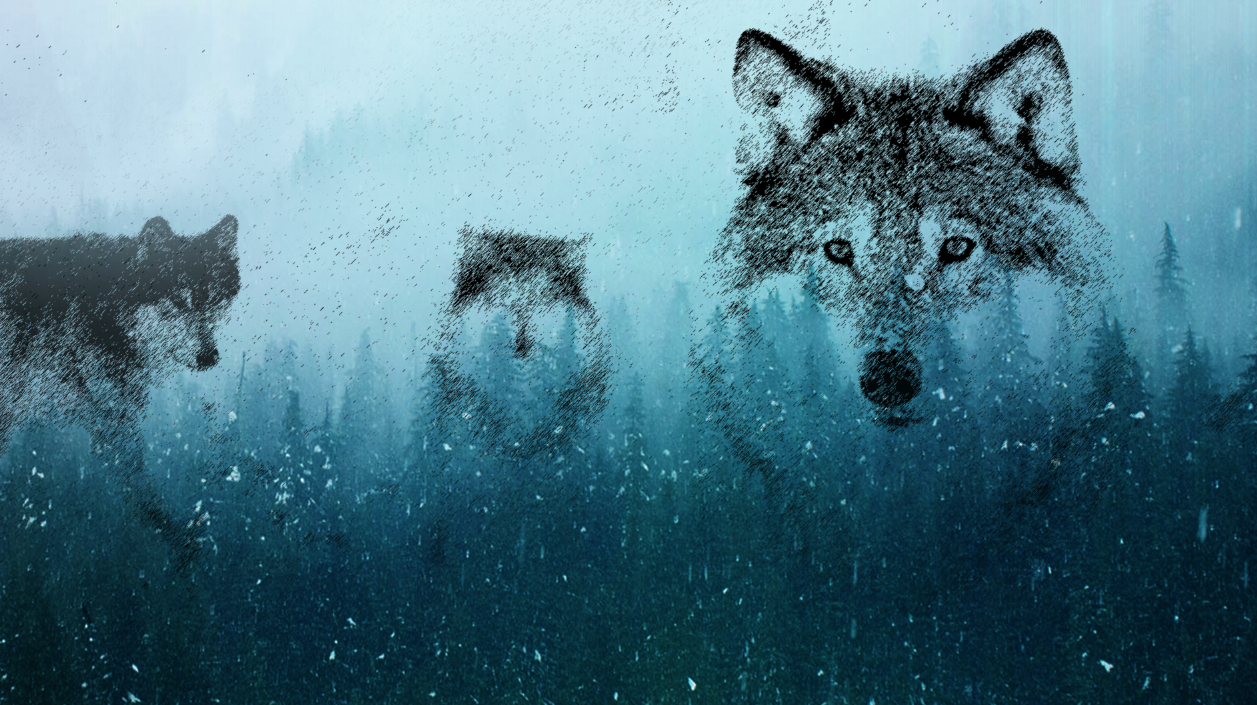 Emma Marris explores the Wolf Niche / Human Niche